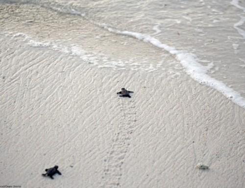 Sea Turtles in Bonaire