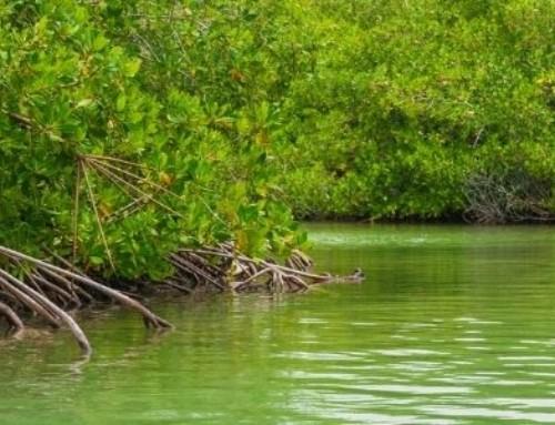 The Mangroves of Bonaire