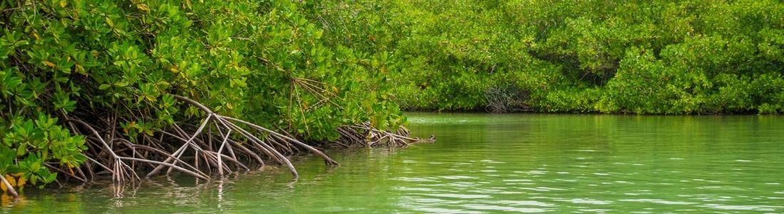 Bonaire Mangroves