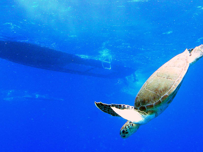 glass-bottom reef snorkel Tour