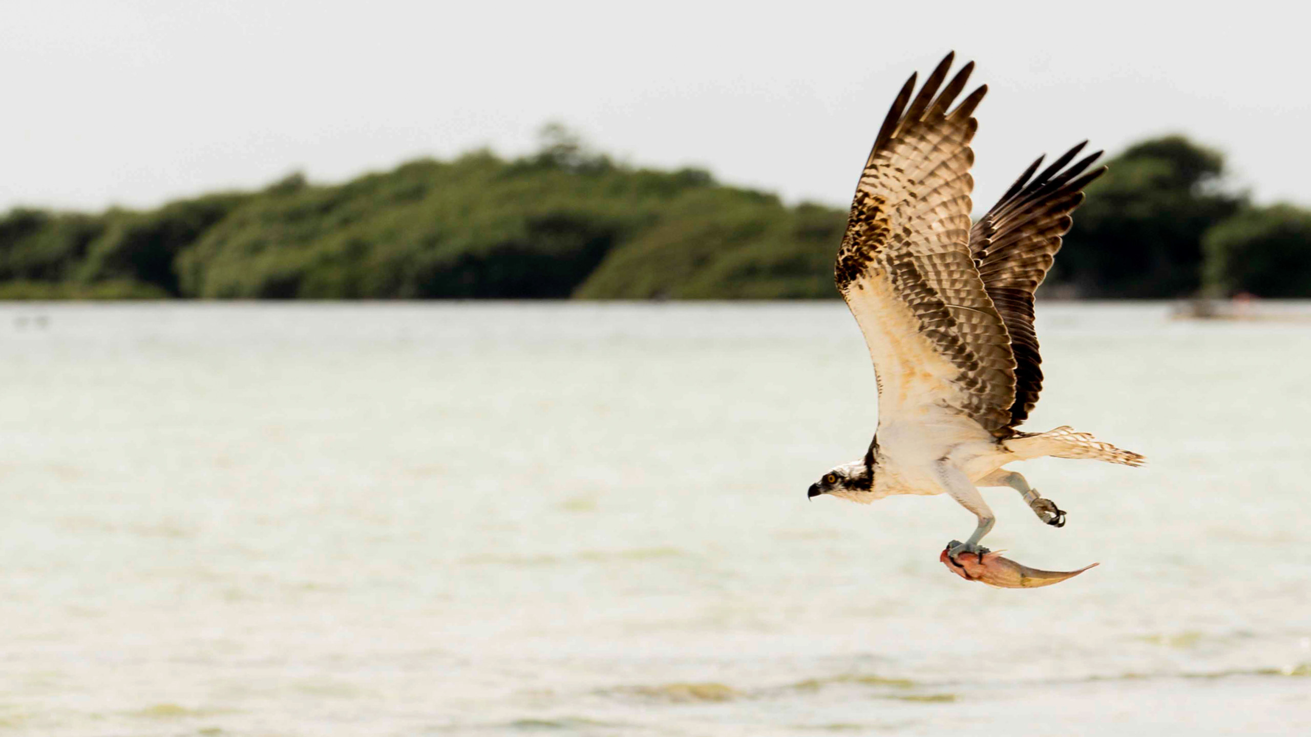Mangroves, Flamingos & Sand