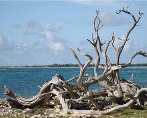 Mangroves Flamingos Bonaire